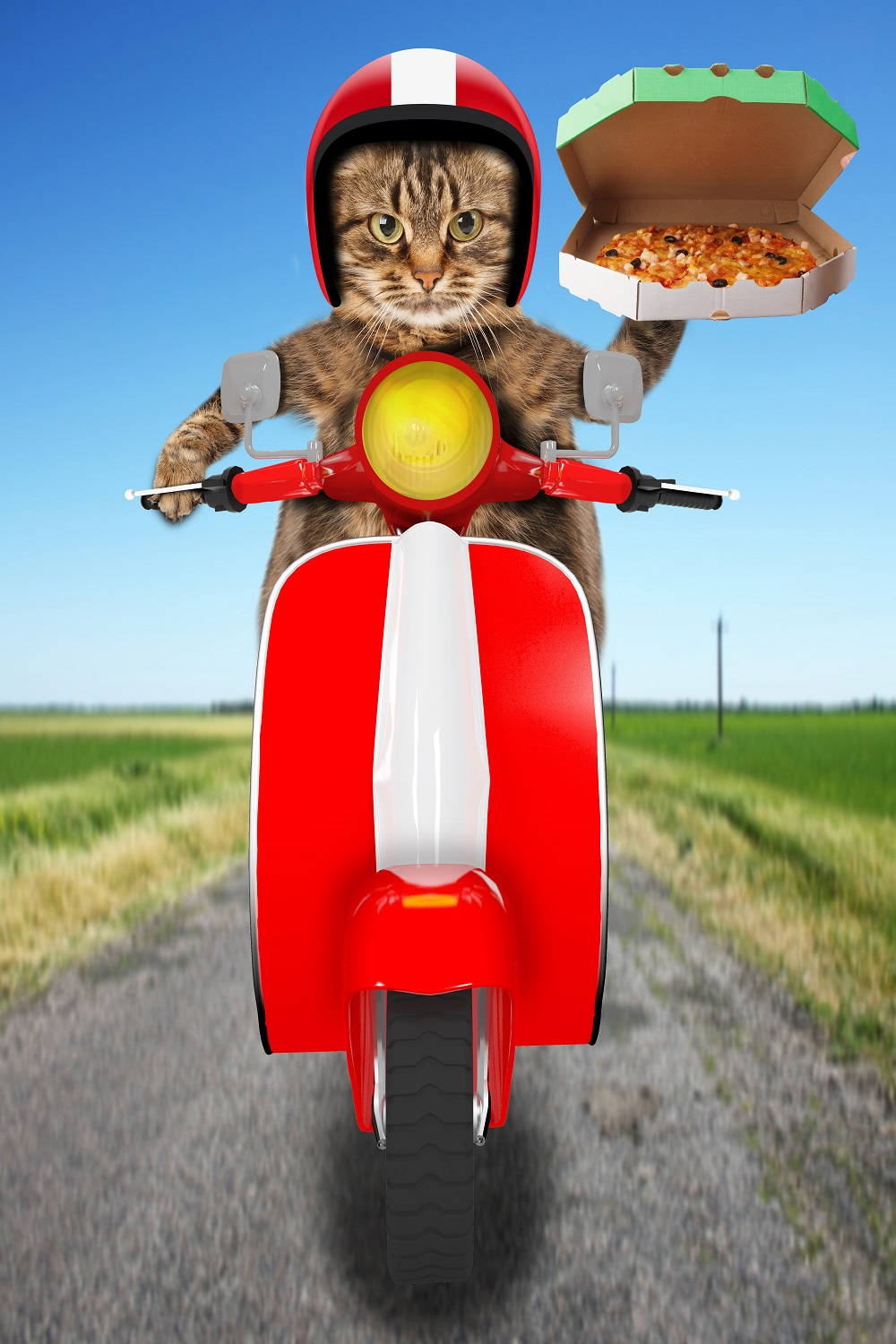 cat pizza delivery